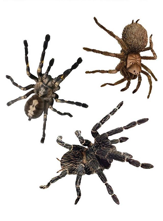 3D Spider Sticker Set Halloween Decoration