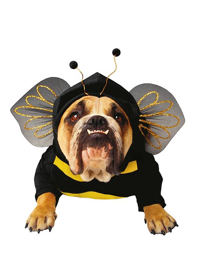 Biene Hundekostüm