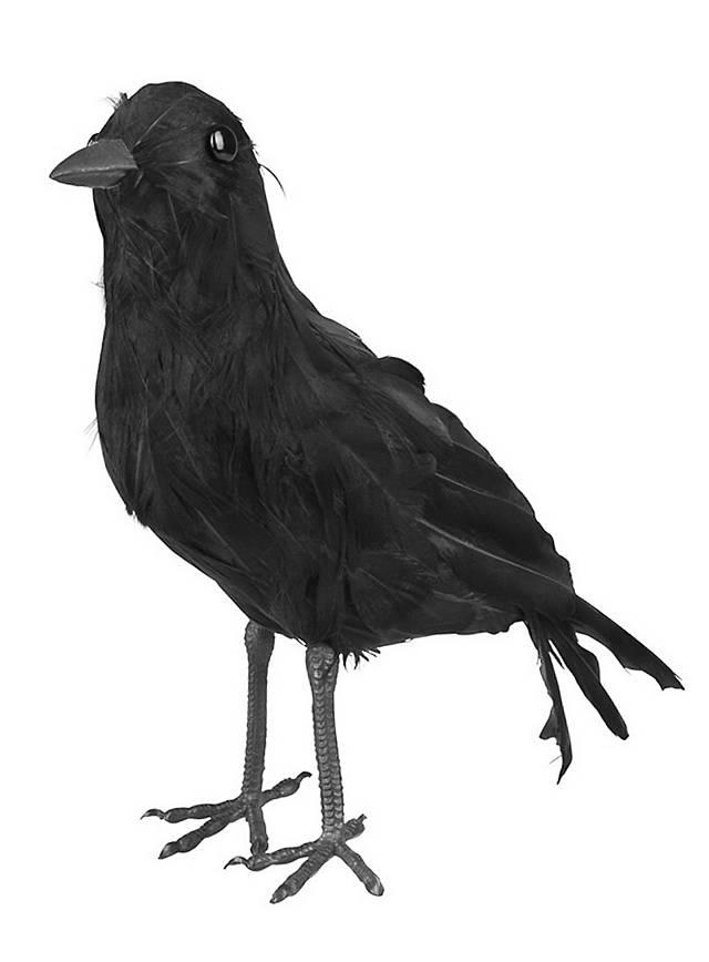 Corneille noire en plumes véritables