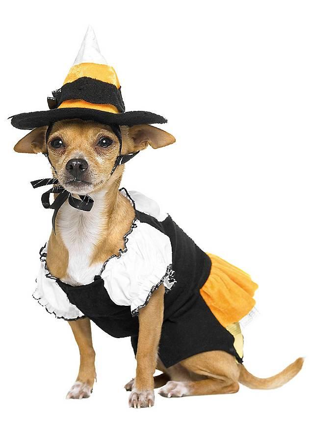 Hexe Hundekostüm