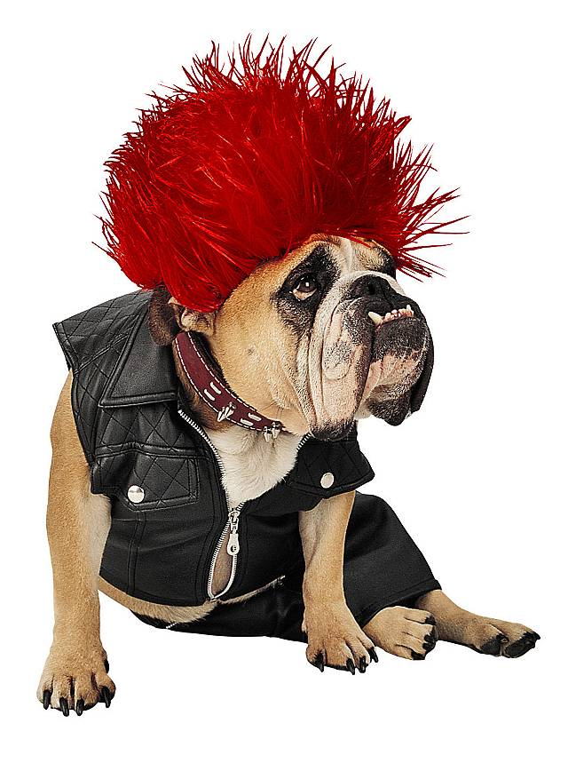 Cm Punk S Dog