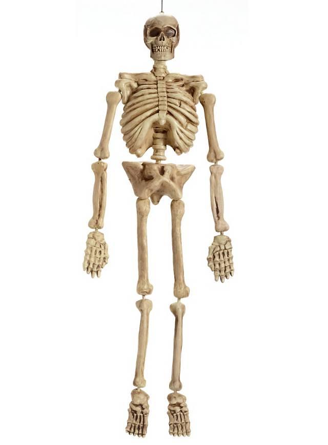 Realistisches Skelett