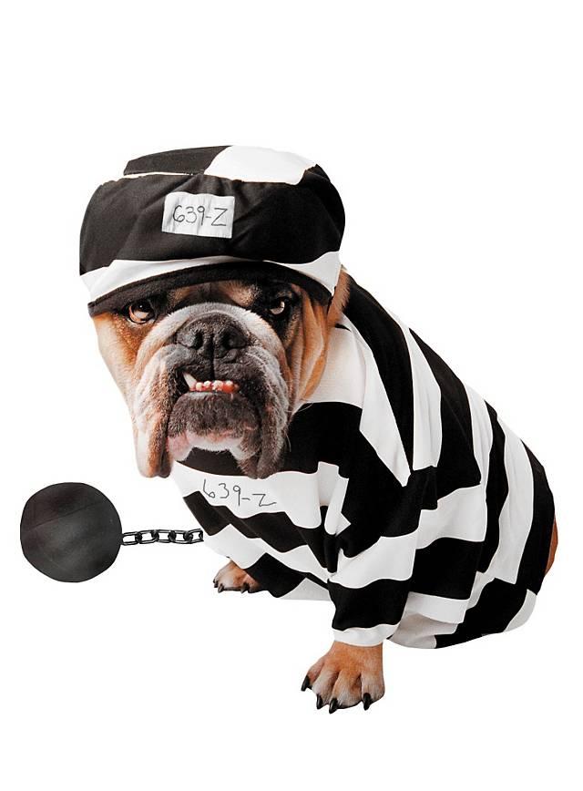 Sträfling Hundekostüm