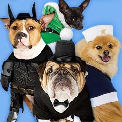 Hundekostüme