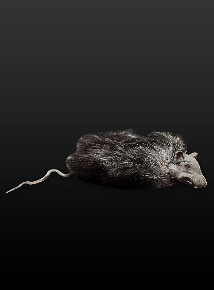 Rat en fourrure