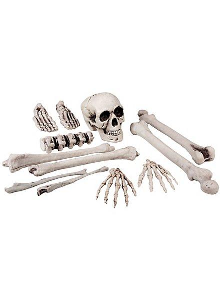 Skull and Bone Decoration