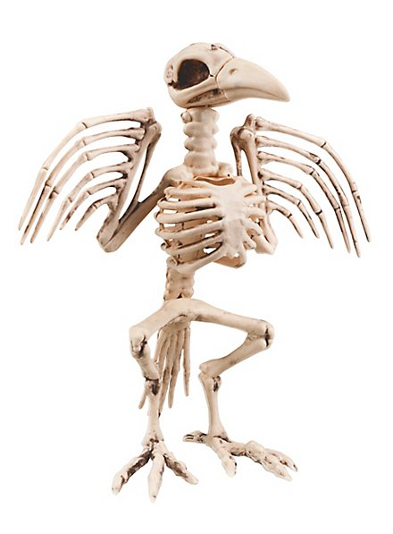 Vogelskelett Halloween Deko