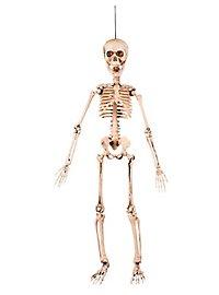 Bewegliches Mini-Skelett