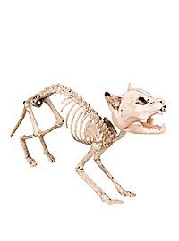 Cat Skeleton Deco