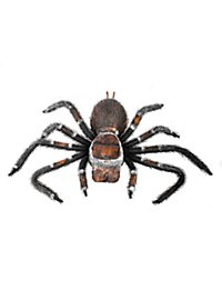 Cuddly Tarantula