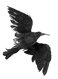 Dead Crow Decoration