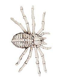 Décoration d'Halloween Squelette d'araignée