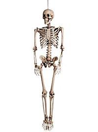 Décoration squelette à accrocher