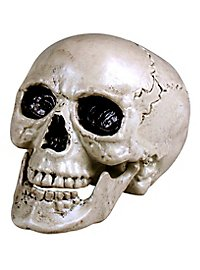 Decorative skull with movable jaw