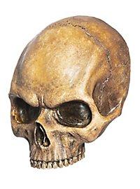 Demi-crâne décoratif en résine