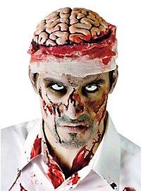 Gehirn Kopfteil