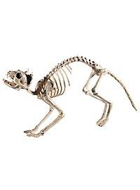 Katzengerippe Halloween Deko