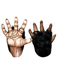Mains de chimpanzé marron