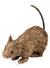 Rat pestiféré