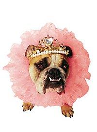 Reine Déguisement de chien