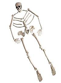 Schädel und Knochen Set
