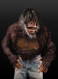 Schimpanse Oberkörper