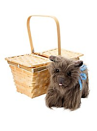 Toto in Basket